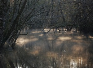 Morning mist on Bruce Creek on the day I saw an Ivory Bill.